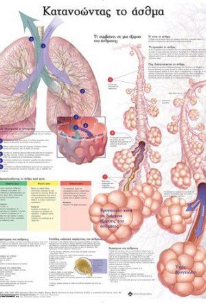 Ανατομικός Χάρτης: Κατανοώντας το Άσθμα