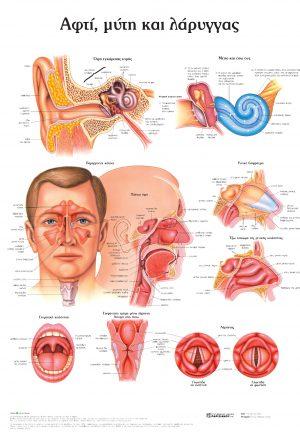 Ανατομικός χάρτης: αφτί, μύτη και λάρυγγας (1η εκδ.)