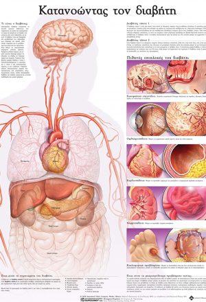 Ανατομικός χάρτης: κατανοώντας το διαβήτη